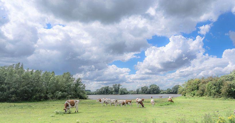 In den Überschwemmungsgebieten der IJssel von René van Leeuwen