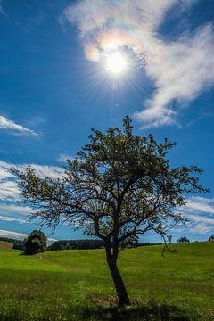 Nur ein Baum von Lukas Coenraats