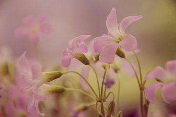 Vintage Flowers von Tanja de Boer