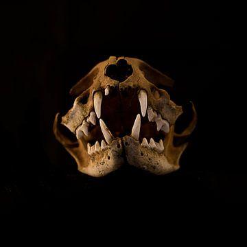 Crâne de sanglier sur DroomGans