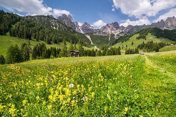 Frühlings-Blumenwiese in den Bergen von