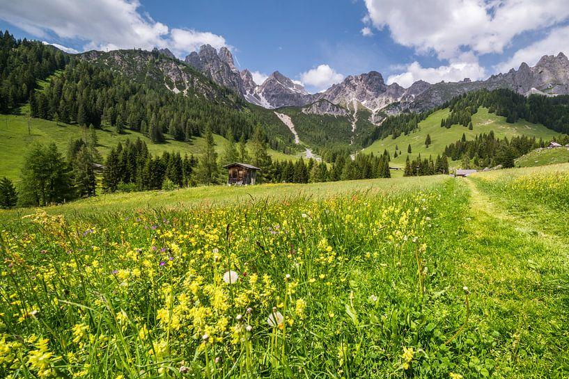 Voorjaar in de bergen van Coen Weesjes