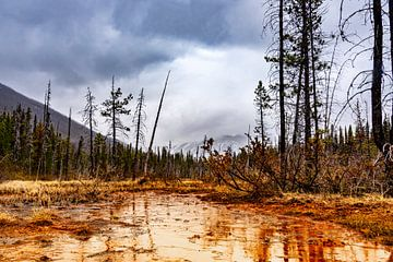 Regen in den Paint Pots, Kootenay NP, Kanada von Rietje Bulthuis