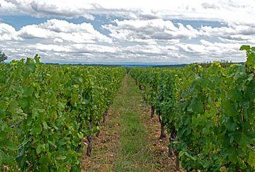 Franse wijngaard von Judith Cool