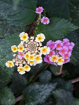 Tropische wilde bloemen van Renee Alexandra Serlier