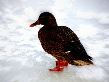 Female Duck in Winter van Nicky`s Prints