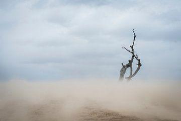 Lonely - Loonse en Drunense Duinen van Laura Vink