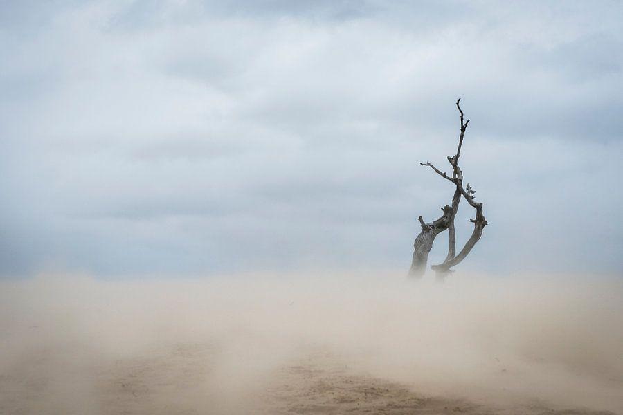 Lonely - Loonse en Drunense Duinen