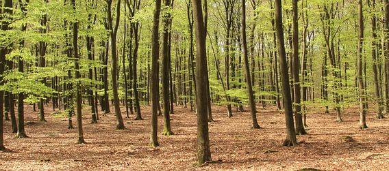 In het bos van Ron de Vries