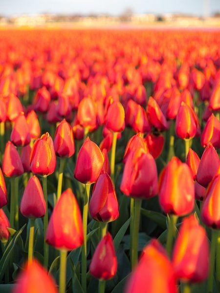 Tulpenzee en Dorp van David Hanlon