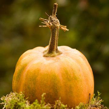 Oranje pompoen  een mooie decoratie in de herfst van J..M de Jong-Jansen