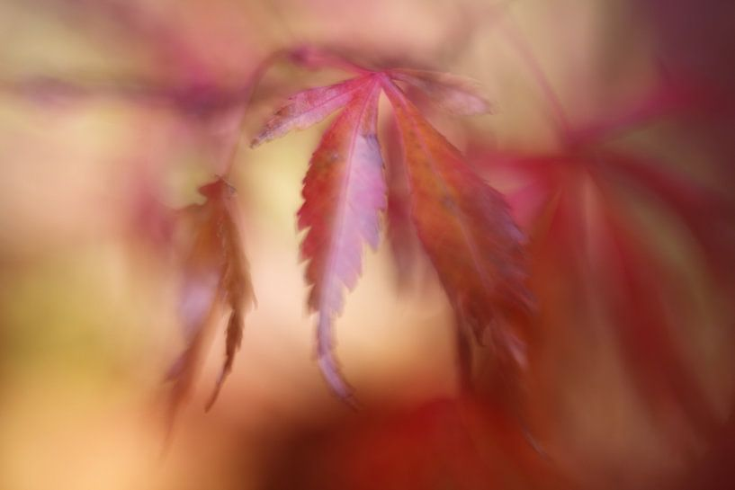 A soft touch of autumn.... van LHJB Photography