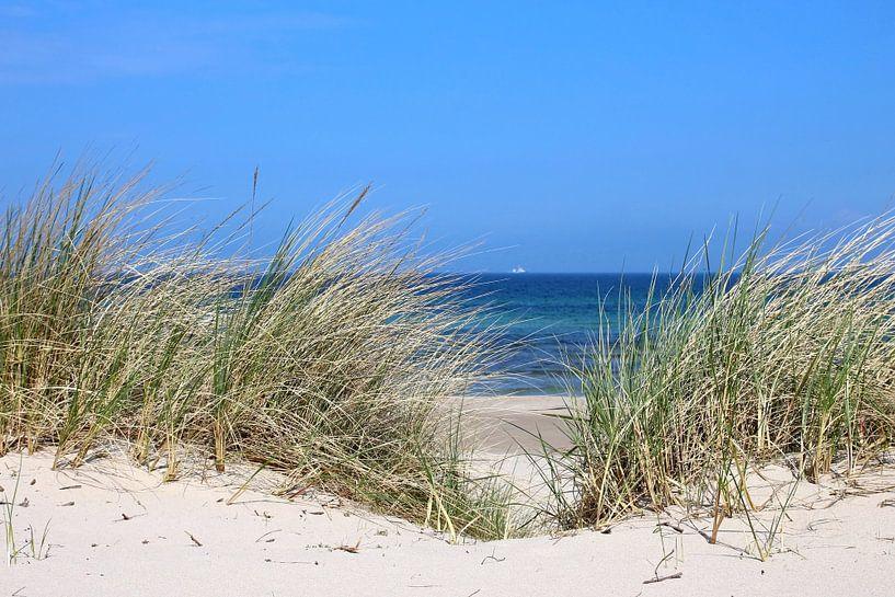 dunes van Ostsee Bilder
