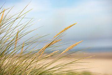 L'herbe à casque au bord de la mer sur Percy's fotografie