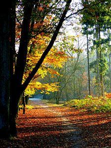 Bospad Herfst van