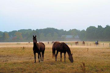 Paarden in nevelige weide van Cornelis Heijkant