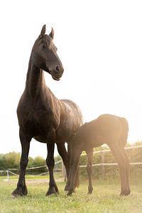 Un cheval fier avec un poulain au soleil sur Made By Jane