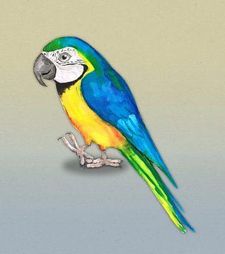 Blauwgele ara papegaai van Bianca Wisseloo