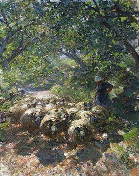 Kudde schapen met herderin in het schaduwrijke ravijn, HEINRICH VON ZÜGEL, Ca. 1920 van Atelier Liesjes