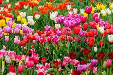 Kleurrijk van Joke Beers-Blom