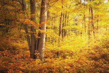 Les couleurs de l'automne dans la forêt sur Tobias Luxberg