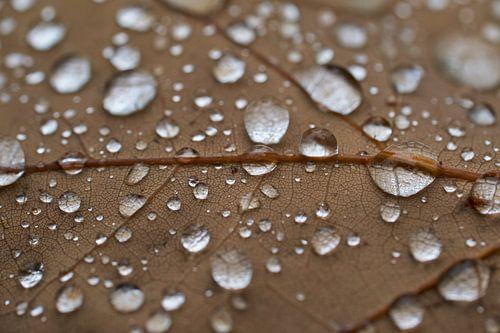 Regen druppels op een eiken blad van