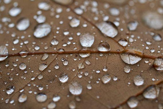 Regen druppels op een eiken blad