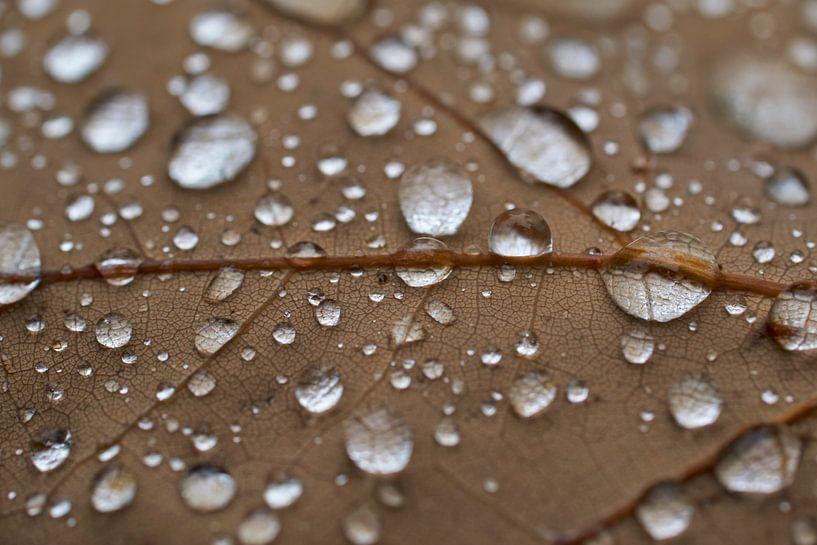 Regen druppels op een eiken blad van Cor de Hamer