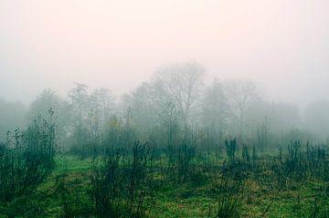 Grüner Waldrand Feld Wiese Rosa Himmel von Nicole Schyns