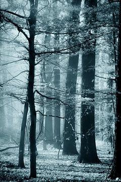 Herfst speciaal van Ingrid Van Damme fotografie