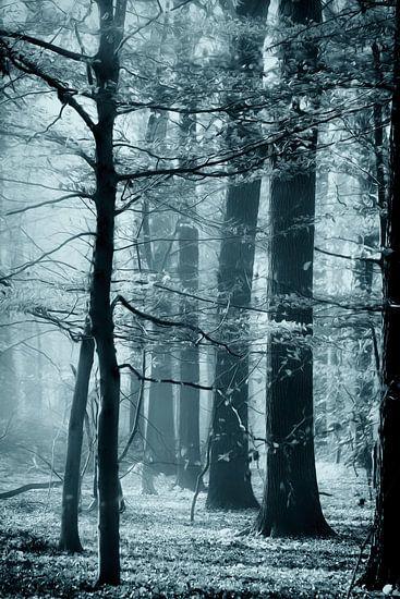 Herfst speciaal van Vandain Fotografie