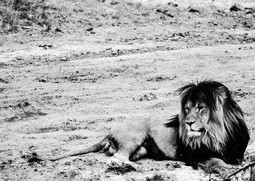 Lion van melissa demeunier