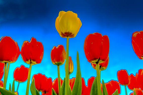 Gele Tulp tussen de Rode Tulpen