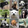 beren collage von Marja Hoebe Miniaturansicht