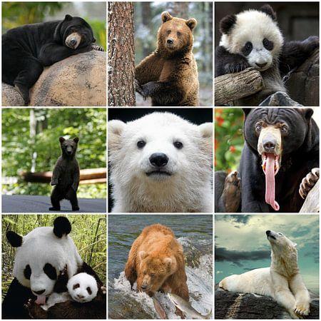 beren collage