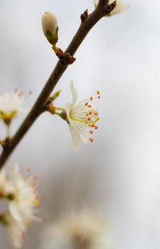 Blüte, Blumen von Nynke Altenburg