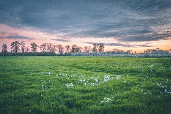 Spring meadow (Utrecht / Bunnik) van Alessia Peviani