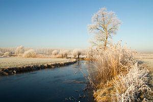 Bomen met rijp langs een dicht gevroren rivier