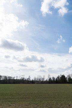 Weiland met Hollands Licht van Lieke van Grinsven van Aarle