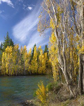 Herfstkleuren van Keith Wilson Photography