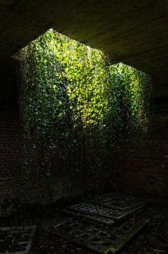De hangende tuinen van Babylon von Jaco Verheul