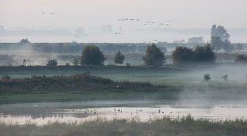 ochtend mist met vogels sur gelske kwikkel
