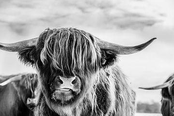 Portret van Schotse hooglander in zwart wit van KB Design & Photography (Karen Brouwer)