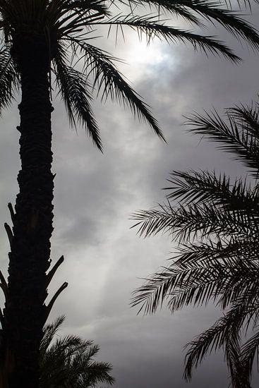 Palmbomen van Johan Zwarthoed