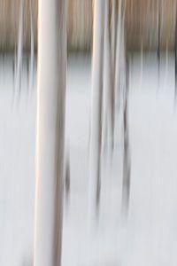 Abstracte bomen in de sneeuw in Rotterdam