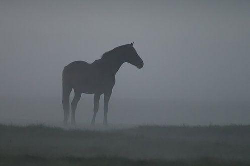 Een paard in de mist