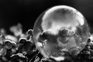 Mehl in Blasenform von Anthea van den Berg