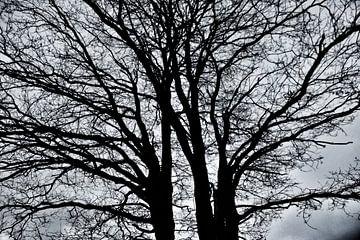Silhouette eines Baumes auf einer Heide von Teun Gerritsen