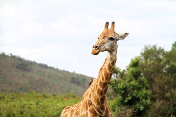 Giraffe van Lotte van Dulmen