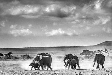 Elefanten in Afrika von Yolanda Wals